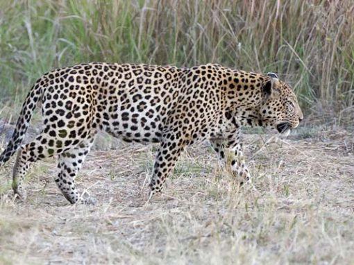 Wild Waters Safari – Okavango & Victoria Falls
